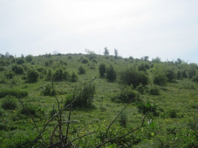 Алматы, р-н Медеу, ПК Горный Гигант, участок 554